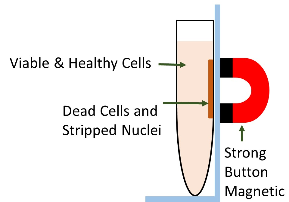 Dead cell purification product